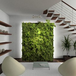 perete verde