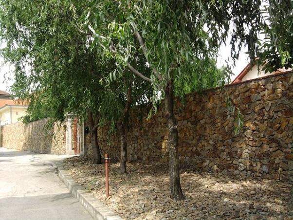 conac Timisoara 3