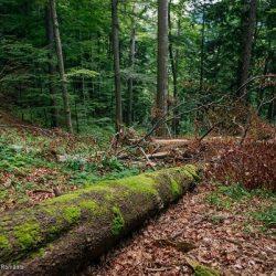 initiativa pentru protejarea padurilor Romaniei