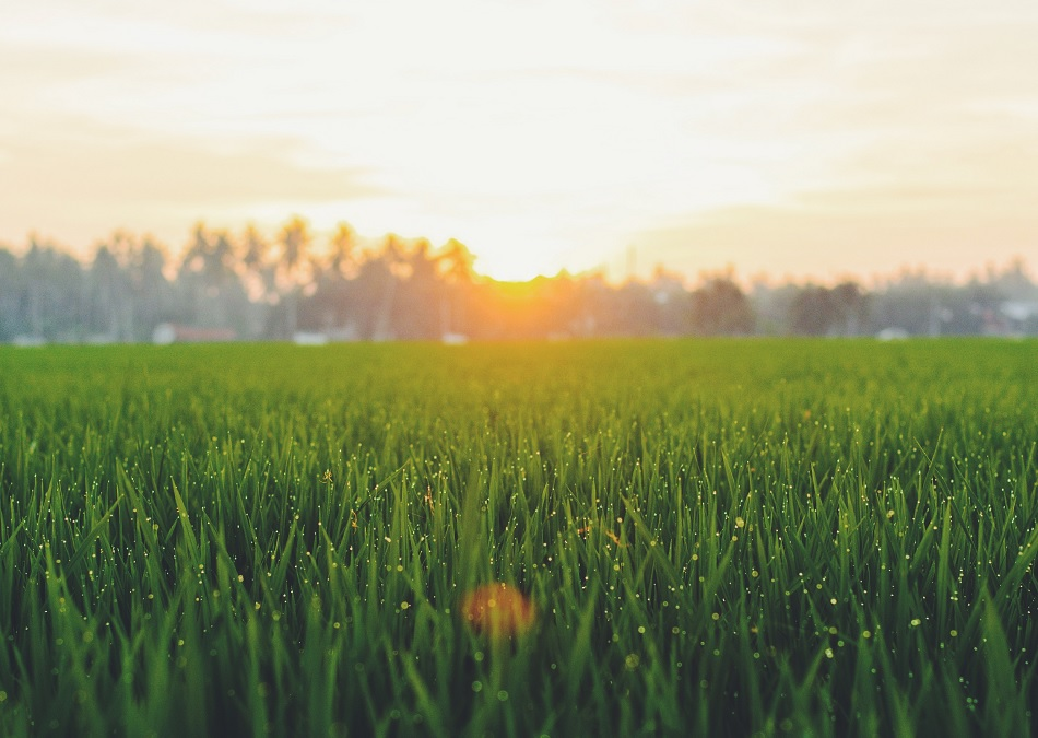 Trei sferturi dintre investitorii în terenuri au încheiat sau se așteaptă să încheie tranzacții în 2020
